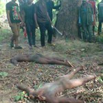 Two beheaded corpses, victims of the conflict, lying in the bush
